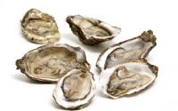 牡蛎的功效作用 用法用量