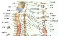 骨髓亏虚,人会丧志,如何才能补骨髓呢