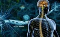 多发性硬化症治疗的新希望——干细胞疗法