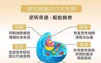 为什么肽能抗衰老?胶原蛋白肽对皮肤的改善作用!