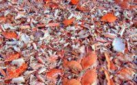 甲壳素能治病吗?甲壳素能调理慢性疾病吗?甲壳素对人体健康的好处!
