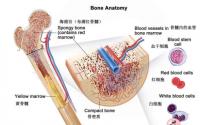 补骨髓能调理什么疾病?牛骨髓真能补肾填髓吗?