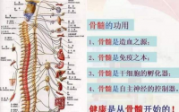 补骨髓产品是怎么提高人体自愈功能的