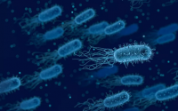 免疫力低的表现,小分子肽与提高免疫力