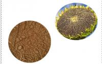葵花盘粉能降尿酸和治疗痛风吗?哪里能买到?