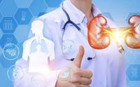 干细胞技术在肾脏再生中的应用最新突破性进展!