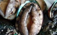 """牡蛎肽在日本竟然被称为""""根之源"""",真够拉风的!"""