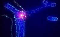 牛骨髓肽与骨骼健康,牛骨髓肽对骨质疏松的预防和恢复实验