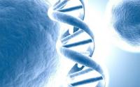 吃小分子活性肽的重要性,你知道吗?