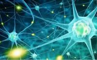免疫细胞和干细胞对脑损伤的修复作用,干细胞与神经修复
