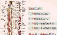 人参牛骨髓肽滋养骨髓及健康管理