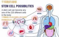 骨髓干细胞在治疗自身免疫性疾病中的应用