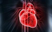 胶原蛋白对心脏的重要作用,冠心病人必看!!!