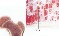 吃什么能补骨髓?补肾补骨髓的偏方?补骨髓的食品(一应俱全)