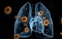 骨髓对免疫力的作用有多重要,你知道吗?