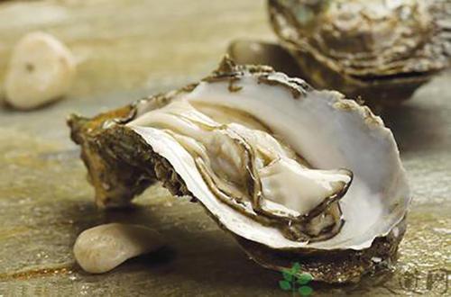 什么牌子的黑松露牡蛎肽好?如何选择牡蛎肽?