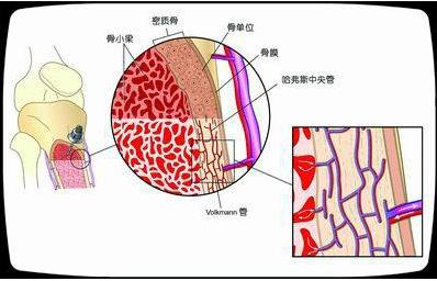 骨髓与造血.png