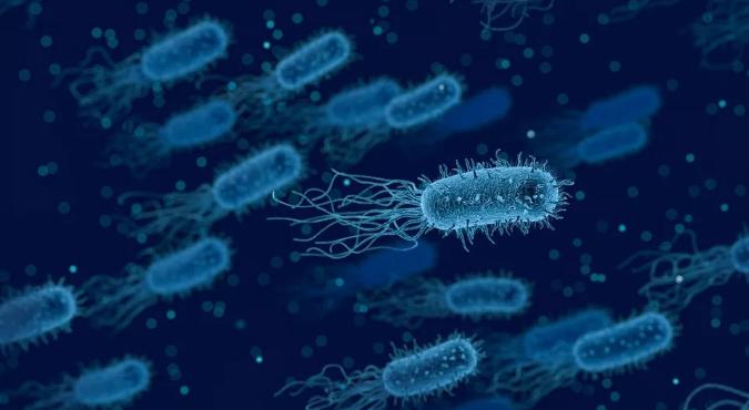 有研究发现苦瓜多肽可增强肝细胞活力有效增强免疫力