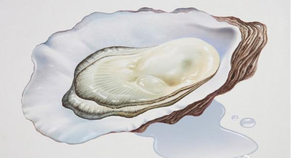 女人可以吃牡蛎肽吗.png