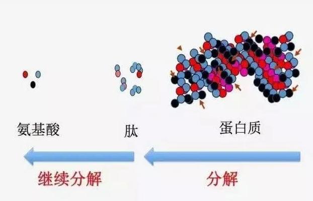 小分子肽合法吗.png