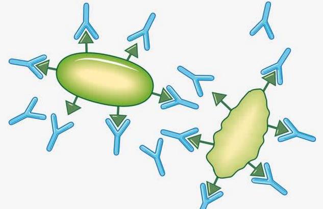 肽调节免疫力.png