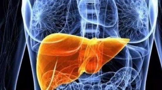 干细胞能再生肝脏吗.png