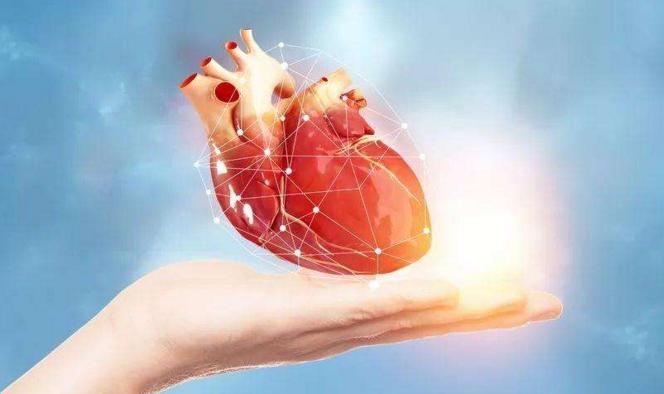 干细胞能让心肌再生吗.png
