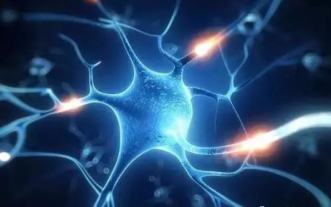 小分子肽营养神经.png