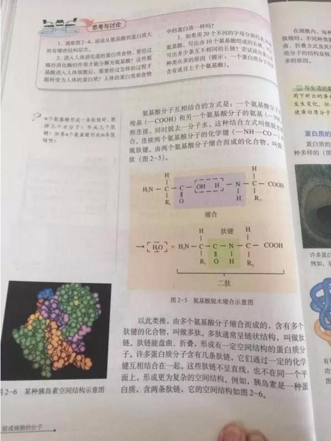 小分子肽是真的吗.png