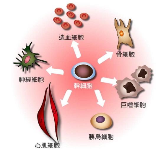 干细胞注射能治疗什么疾病.png