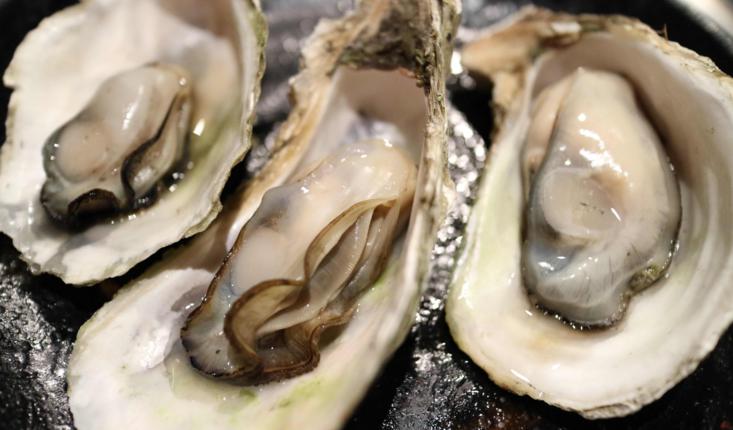 牡蛎肽.png