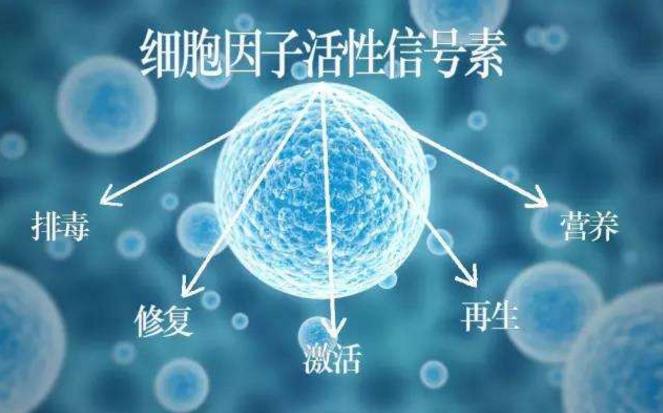 小分子肽能治疗什么疾病.png