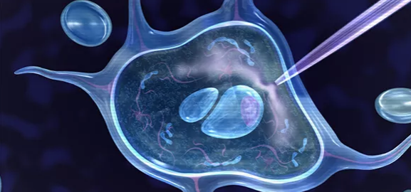自体干细胞激活治疗不孕不育.png