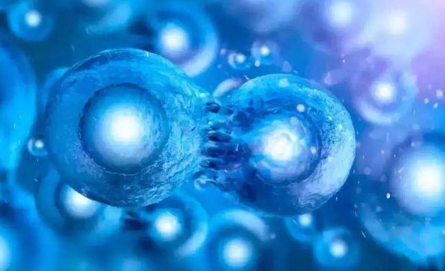 脐带血干细胞与抗衰老.png