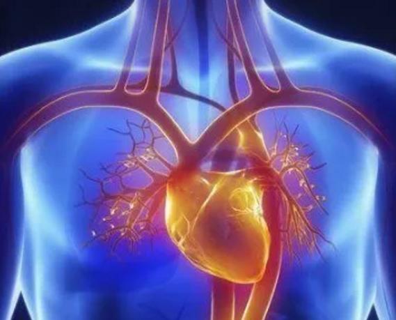 干细胞对心脏好吗.png