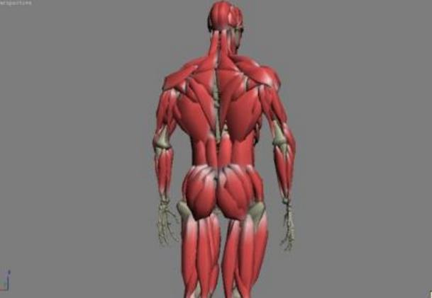 """胶原蛋白被称为""""骨中之骨,肤中之肤,肉中之肉"""""""