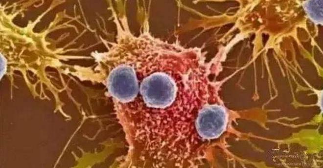 癌症病人可以吃小分子肽吗.png