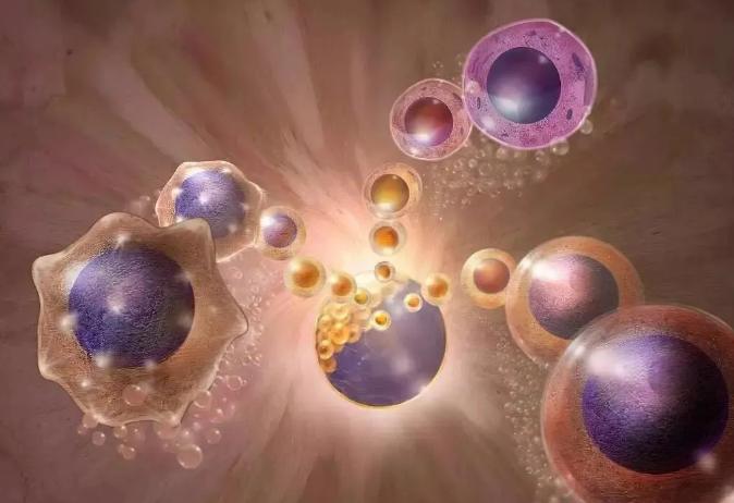 干细胞注射能治疗脑出血后遗症吗.png