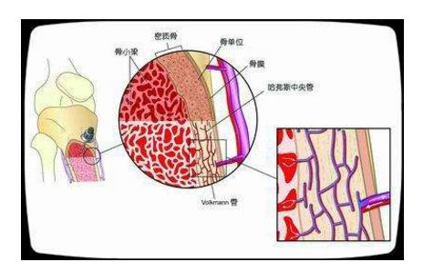 骨髓的重要性.png