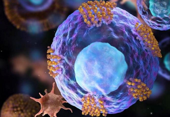 肽真的能修复细胞吗.png