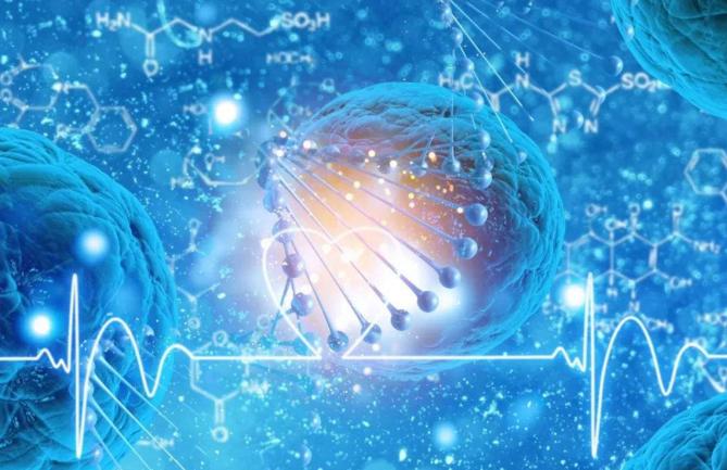 小分子肽修复细胞.png