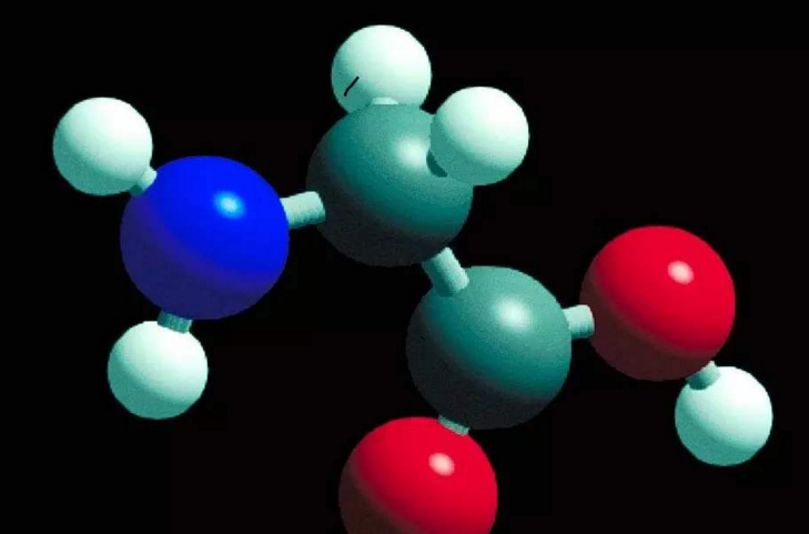 肽的功能与作用.png