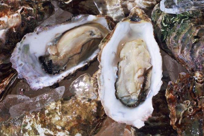 牡蛎牛骨肽的功能与作用