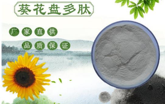 葵花盘粉是否能治愈痛风,多久能看到效果?