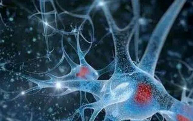 小分子肽好吸收吗?人体对小分子肽吸收与转运机制