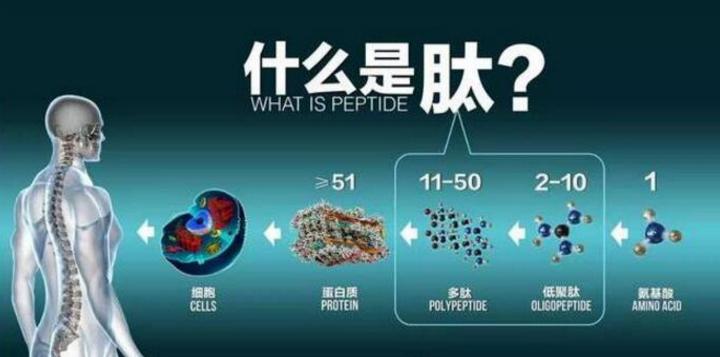 肽与蛋白哪个好.png