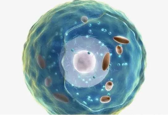 相比于蛋白粉专家更加强烈建议老年人补点肽