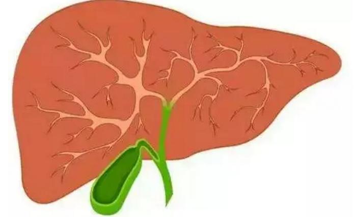肽能修复肝脏吗.png