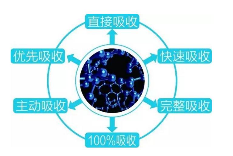 人体对肽的吸收方式.png