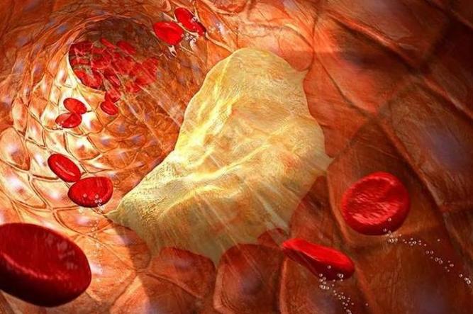 小分子肽对血管的营养作用